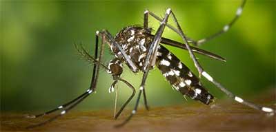 foto di disinfestazione zanzara tigre