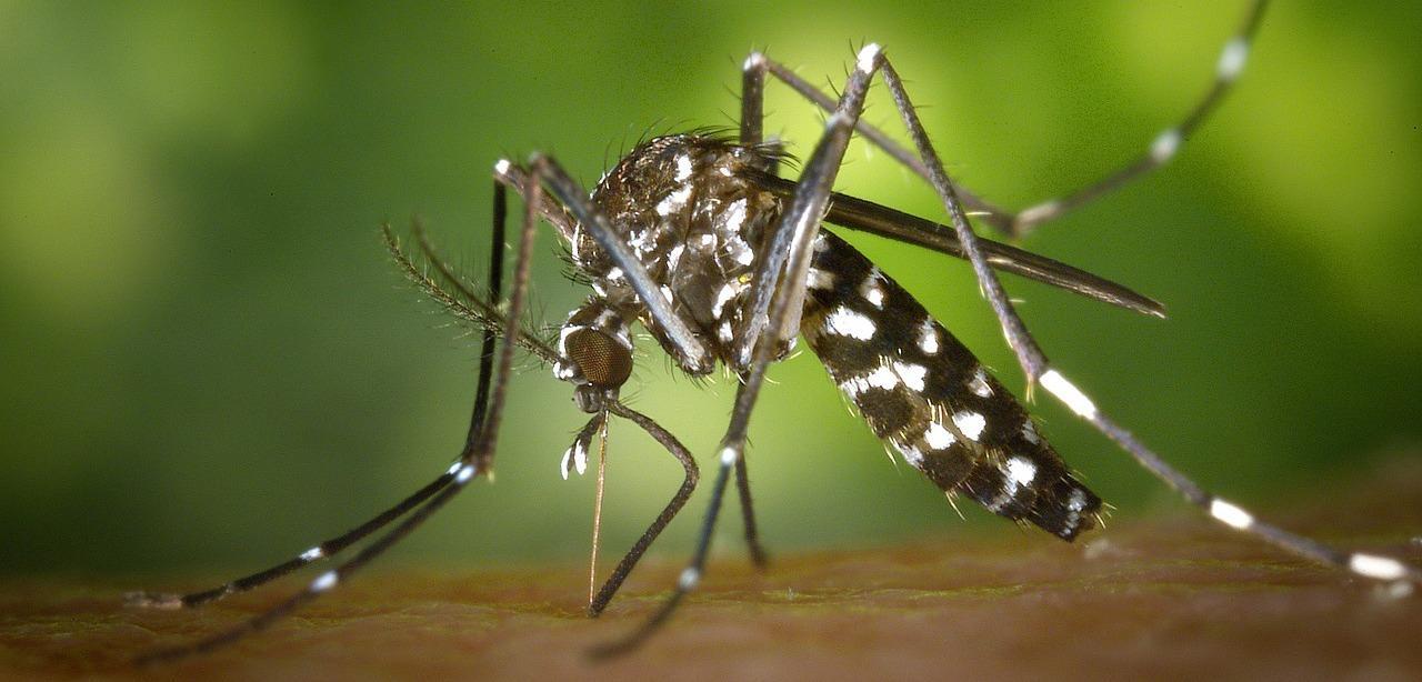 Virus zika disinfestazione a scopo di prevenzione