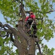 potatura alberi Roma: 100Mani srl prezzi imbattibili