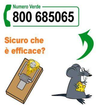 Derattizzazione Roma: trappole per topi e ratti efficaci con 100Mani srl