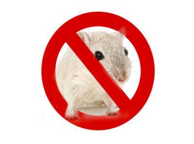 derattizzazione Roma e disinfestazione di ratti e topi.