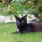 Cura del Verde: foto di un gatto che si rilassa nel prato