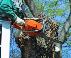 Abbattimento alberi alto fusto Roma 292x240 c - 100Mani srl: servizi senza stress