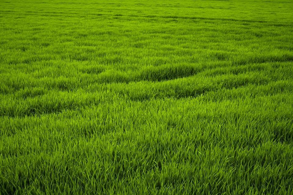 Cura del verde con il caldo estivo