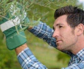 Giardiniere a domicilio 292x240 c - 100Mani srl: servizi senza stress