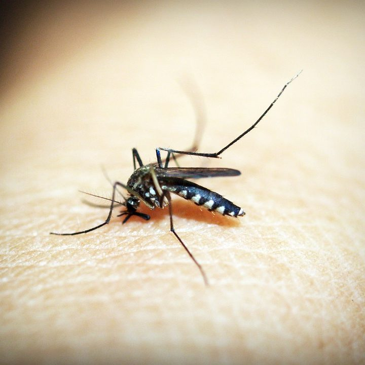 Pericolo Zika