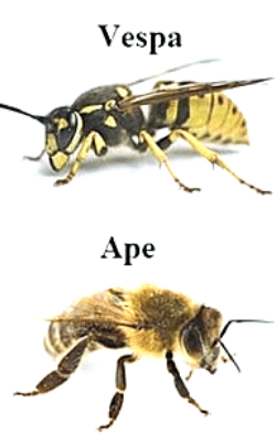 Uccidere vespe